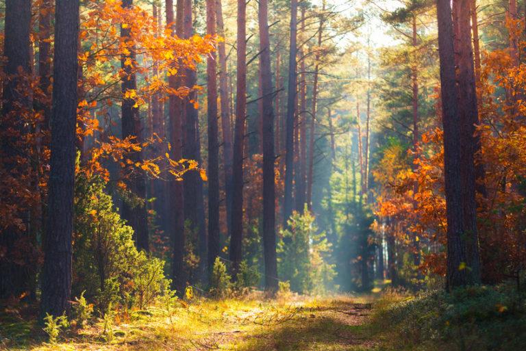 La gestion des forêts se modernise