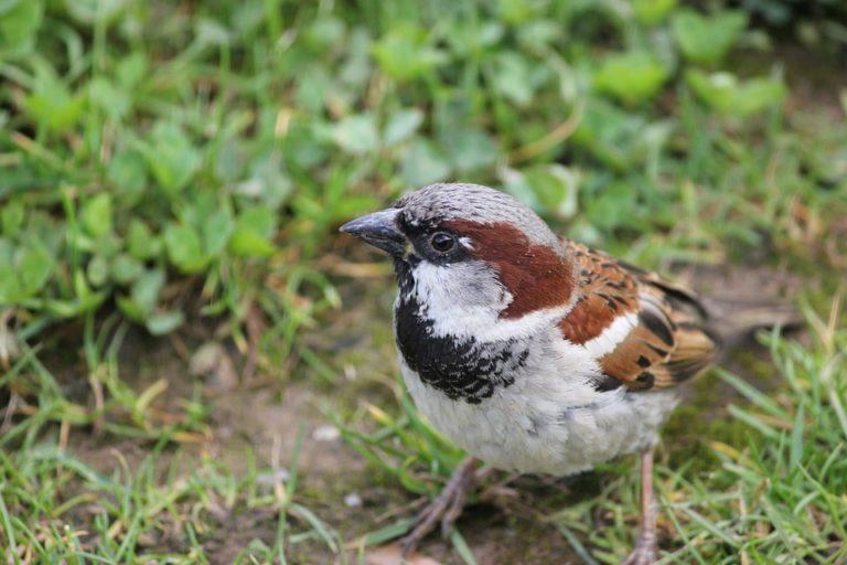 3 oiseaux commun que l'on peut observer au jardin
