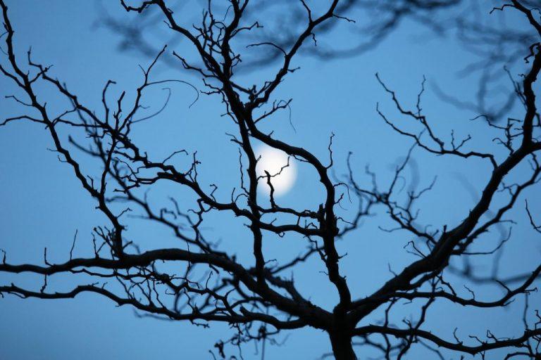Jardiner avec la lune – Calendrier lunaire des jardins 2021