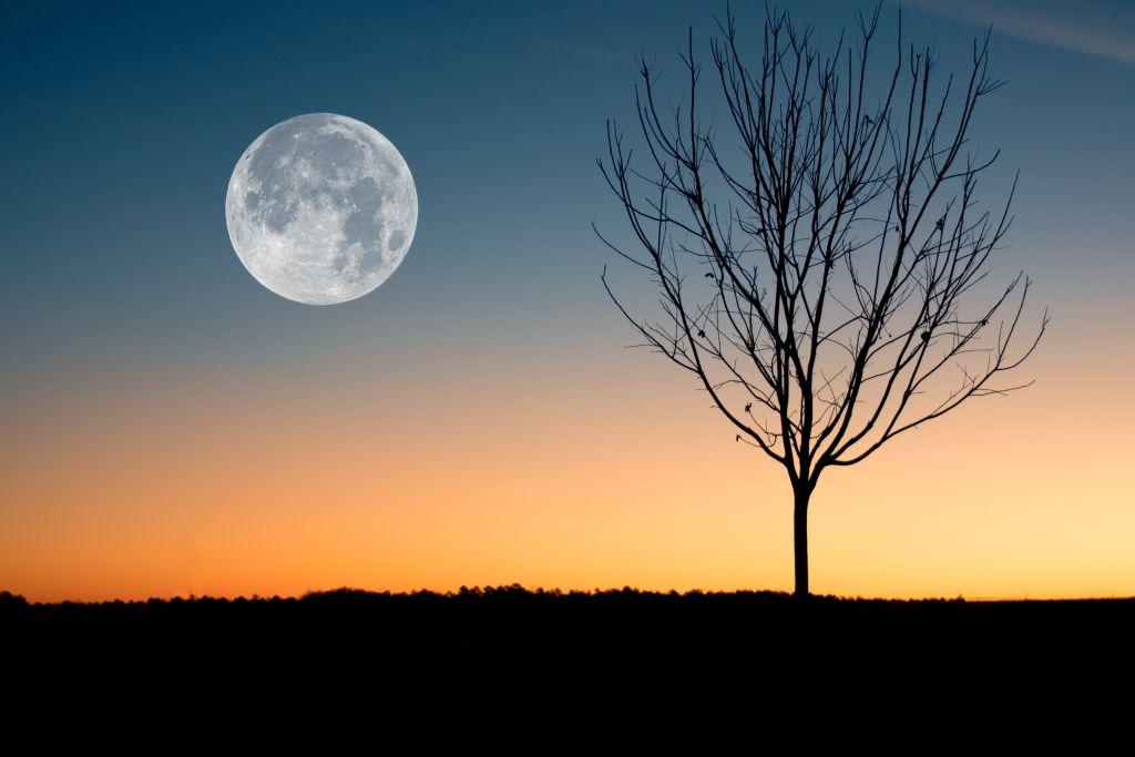 nuit-arbre-lune-potager